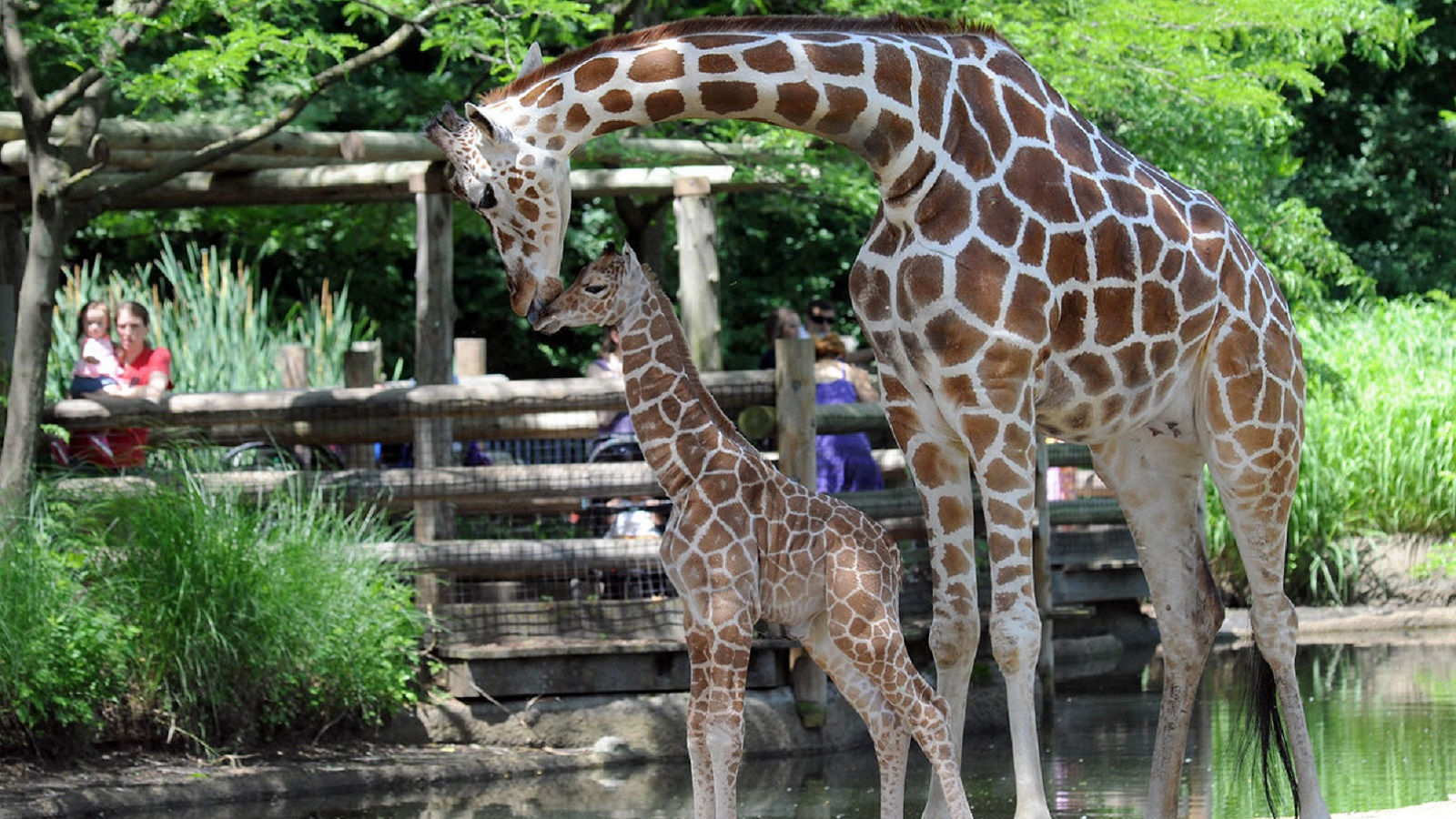 things to do with kids includes visiting Brookfield Zoo